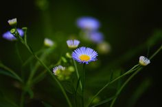 Simplicity of nature... by j_jyarbrough, via Flickr