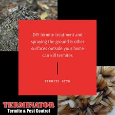 There are many myths out there about termites and Terminator Termite & Pest Control is here to help you debunk those myths! Diy Termite Treatment, Termite Pest Control, Surface, Cards Against Humanity, Learning, Blog, Blogging, Study, Teaching