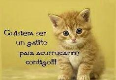 Imagenes De Gatitos Tiernos Con Frases De Amor Animals۵lovers