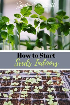 Container Gardening For Beginners Get those seedlings started inside this year and grow your own vegetables! I take you through all the steps for success! Organic Vegetables, Growing Vegetables, Gardening For Beginners, Gardening Tips, Gardening Magazines, Gardening Zones, Gardening Supplies, Sloped Garden, Different Plants