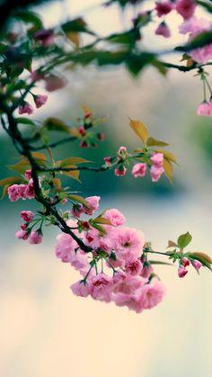 Nature Spring Plum Branch Bokeh Blur #iPhone #6 #wallpaper