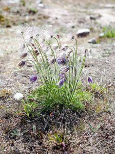 Kevätjuhlapäivänä talvitakissa - valokuvausretki Örön saarelle