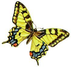 free+clip+art | Butterfly Clip Art Free | Butterfly