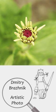 Dmitry Brazhnik   Artistic Photo   Printable   Design   Interior   Instant Download   Yellow flower Photography (fragment)   Full Color Summer Garden Green Grass   №D-1003