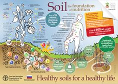 Our soils are by nature linked to the micronutrient content of our food production. The poster shows how to reverse the increasing trend of nutrient depleted soil by adopting sustainable soil management practices. Healthy Nutrition, Healthy Recipes, Healthy Food, Healthy Options, Soil Conservation, Mineral Nutrition, Organic Soil, Organic Gardening, Top Soil