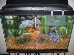 10 most common mistakes with fish keeping