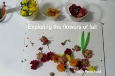 Exploring the colorful flowers of fall from Teach Preschool