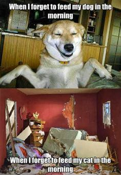 Funny animal pictures of dog vs cat feed aftermath.