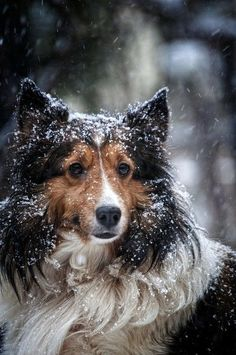 A dog standing outside in the falling snow.