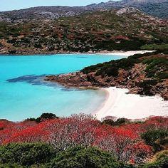 Cala d'arena- Asinara. Sardinia/Cerdeña