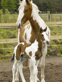 #HORSE##ANIMALS##MOTHER##CUT##FUNNY##PETS##AMAZİNG#