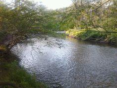 serene river walk.