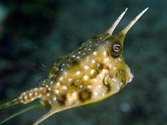 boxfish.jpg by scubaschnauzer, via Flickr