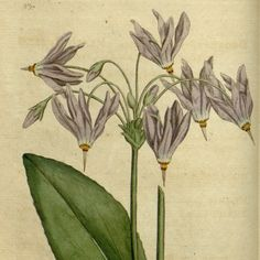 Botanical prints, French Painting, Digital Image, plant, flora, flowers, modern print, art print, Plate 12