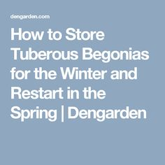 How to Store Tuberous Begonias for the Winter and Restart in the Spring | Dengarden