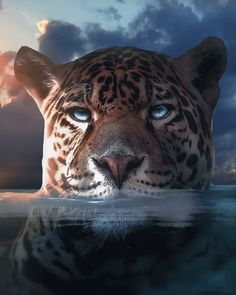Beautiful Cats, Animals Beautiful, Cute Animals, Jaguar Animal, Lion Photography, Big Cats Art, Tiger Art, Animal Species, Animal Wallpaper