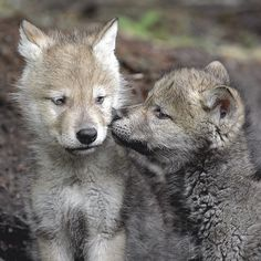 Brotherly Kiss by Scott Bourne