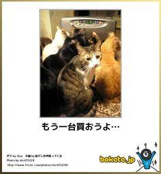 癒される!? 猫ボケ画像ランキング ベスト40 - bokete - goo ランキング