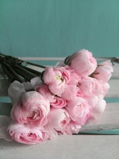 Ranunculus. Pink 러넌큘러스, 라넌큘러스