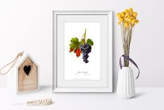 Vintage Botanical Grape art poster picture antique wall living room old image home print wall print cubicle decor drawing watercolor art