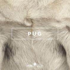 #Dog-Inspired #Design: We think the best, most #beautiful #coats belong to our four-legged family members. #Pug