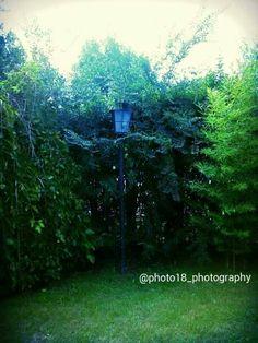 Farol : Quinta de junin Buenos Aires 2012 #naturaleza #juninbuenosaires #buenosaires #farol   #concursodefotografia #fotoamateur #fotoaficionado #participaygana #fotografos #fotografia #concurso #arte #photographers #imagen