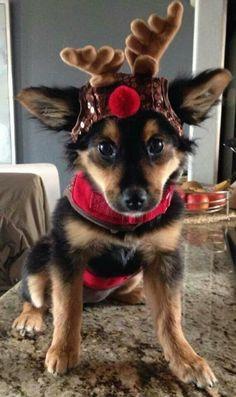 I'm one of Santa's Reindeer