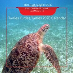 Wildlife Photography, Maldives, Turtles, Conservation, Holiday, Christmas, Trips, Exotic, Photo Gifts
