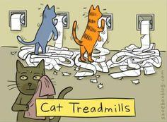 Cat treadmills - ha ha ha ha ha!
