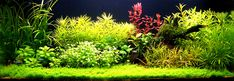 James' Planted Tank - A great overview of the designing process and start up and maintenance of a planted tank (a great online resource!)