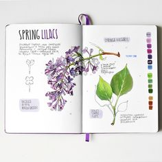 Lilac drawing and painting in a nature art journal. Garden Journal, Nature Journal, Illustration Cartoon, Illustrations, Art Watercolor, Watercolor Flowers, Botanical Drawings, Botanical Art, Gcse Art Sketchbook