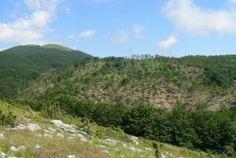 Cronaca: #'L'assalto ai #boschi continua  basta tagli nei parchi nazionali d'Abruzzo e Pollino'. La... (link: http://ift.tt/2ckItxx )