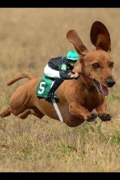 Jockey means something besides underwear? Too cute!