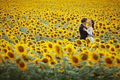 This picture was shot in Cortona, Italy but can we recreated on the North Fork at one of our fabulous farms!    Villa Baroncino near Cortona, Italy wedding sunflower fields