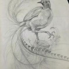 Image result for lyre bird design and images Bird Illustration, Bird Design, Types Of Art, Images, Birds, Photo And Video, Animals, Highlights, Instagram