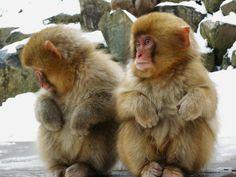 Snow Monkey Park   da Meg Foto Japão