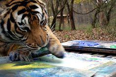 Carolina Tiger Rescue - Google+