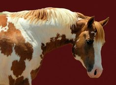 Image result for carter lake reservoir wild horses