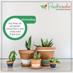 Stay Tuned !! We are soon launching our Online E-Portal, where you can choose from wide variety of Plants, Pots, Planter, Bulb, Pebbles and Various Garden Accessories. #Paudhewala #GreenNuresery #Plants #PlantsFacts #Nature #BuyPlantsOnline #GreenPlant #GardenAssecories Buy Plants Online, Buy Flowers, Garden Accessories, Outdoor Plants, Green Plants, Go Green, Flower Pots, Planter Pots, Nurseries