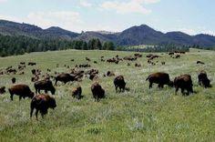 Black Hills South Dakota | Black Hills, South Dakota | Places & Spaces