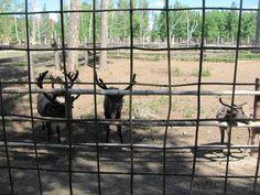 Image IMG 4765 in Kyzkinapapa's images album Kangaroo, Horses, Animals, Image, Baby Bjorn, Animales, Animaux, Animal, Animais