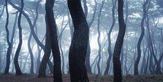 먹으로 그린 한 폭 수묵화 같은 배병우의 소나무 사진 작품 'SNM1A-201HC(2011년 작)'. 서로 기댄 소나무들이 살아 있는 인간 군상을 닮았다.