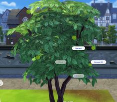 Mod The Sims - Harvestable Olive Tree