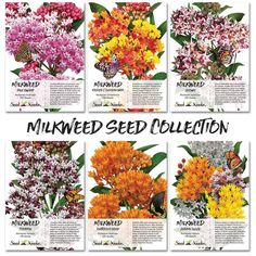 Seed Needs Milkweed Seed Collection Individual Seed Packets) Open Pollinated Seeds Butterfly Garden Plants, Butterfly Weed, Butterfly Gifts, Monarch Butterfly, Butterflies, Butterfly House, Swamp Milkweed, Milkweed Plant, Herb Seeds
