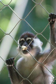 zoomesh for animal cages, animal enclosure, animal fencing, monkey cages, monkey  enclosure at zoomesh.net Monkey Cage, Pet Cage, Fencing, Animals, Fences, Animales, Animaux, Animal, Animais