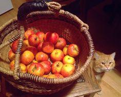 Preparation for winter apple marmalade