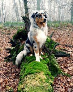 Wow! En plus c'est chien là on oas les yeuxpareils!❤ C'est sa qui les rends mignon