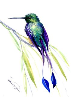 booted racket-tail hummingbird, Hummingbird, original watercolor painting, tropical birds birds and flowers, turquoise  blue green by ORIGINALONLY on Etsy