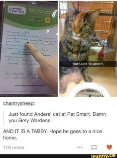 Oh maker! This is so cute!!! If only I could have this cat