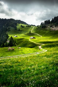 Swiss Alp Grassland by YuriFineart on 500px